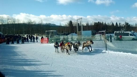 The Crazy Reindeer Cup